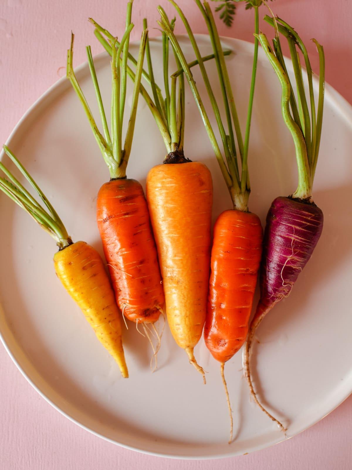 frisch geerntete Bio Karotten von unserem Acker